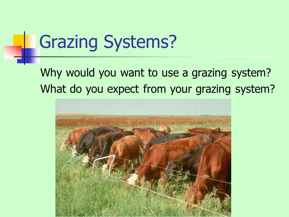 Grazing Systems? Why would you want to use a grazing system? What do you expect from your grazing system?