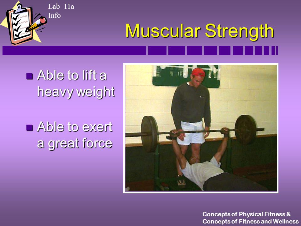 Concepts of Physical Fitness & Concepts of Fitness and Wellness Muscular Strength n Able to lift a heavy weight n Able to exert a great force Lab 11a Info