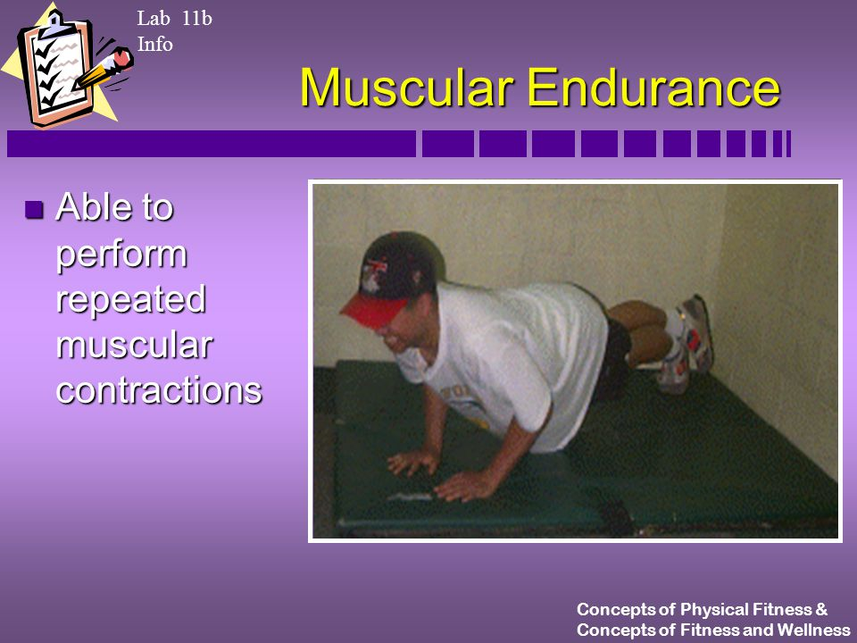 Concepts of Physical Fitness & Concepts of Fitness and Wellness Muscular Endurance n Able to perform repeated muscular contractions Lab 11b Info