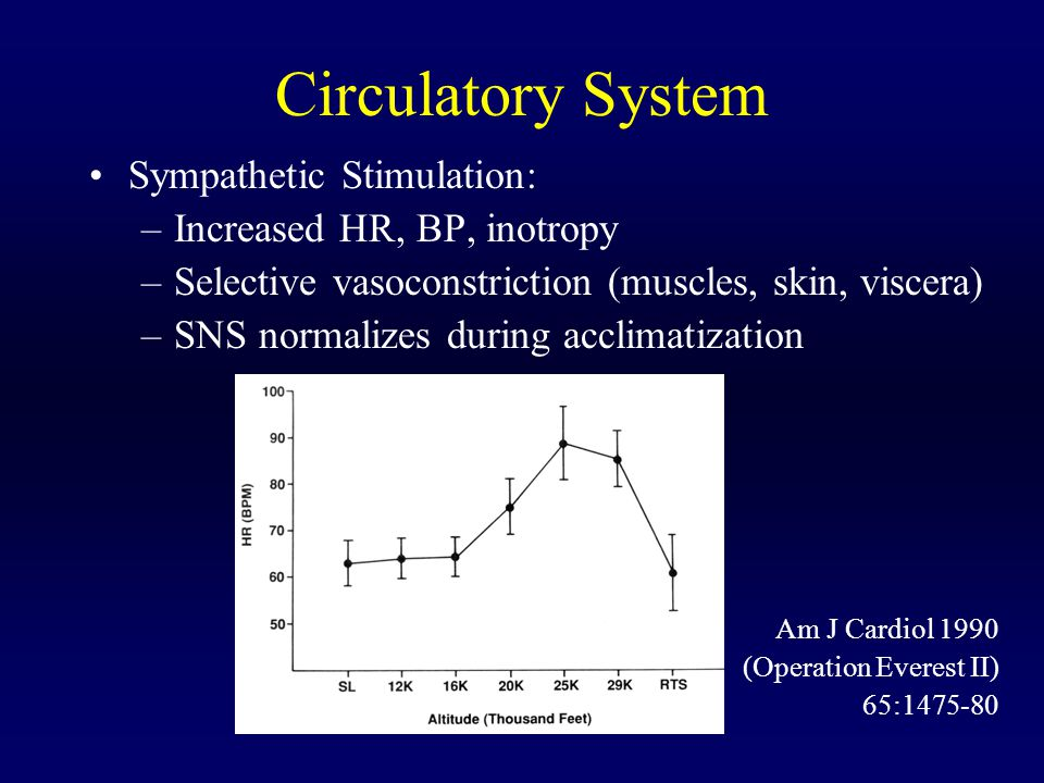 Circulatory System Sympathetic Stimulation: –Increased HR, BP, inotropy –Selective vasoconstriction (muscles, skin, viscera) –SNS normalizes during ac