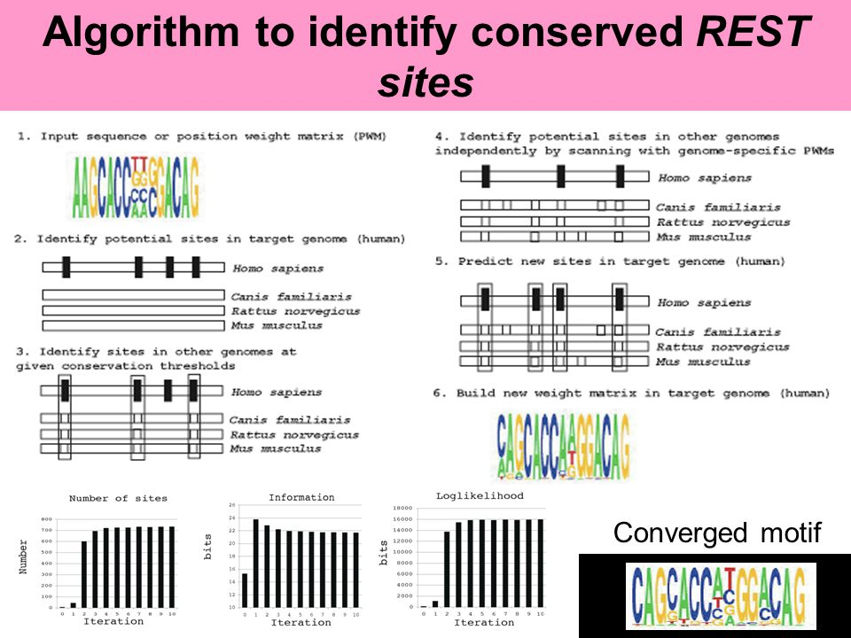 Algorithm to identify conserved REST sites Converged motif