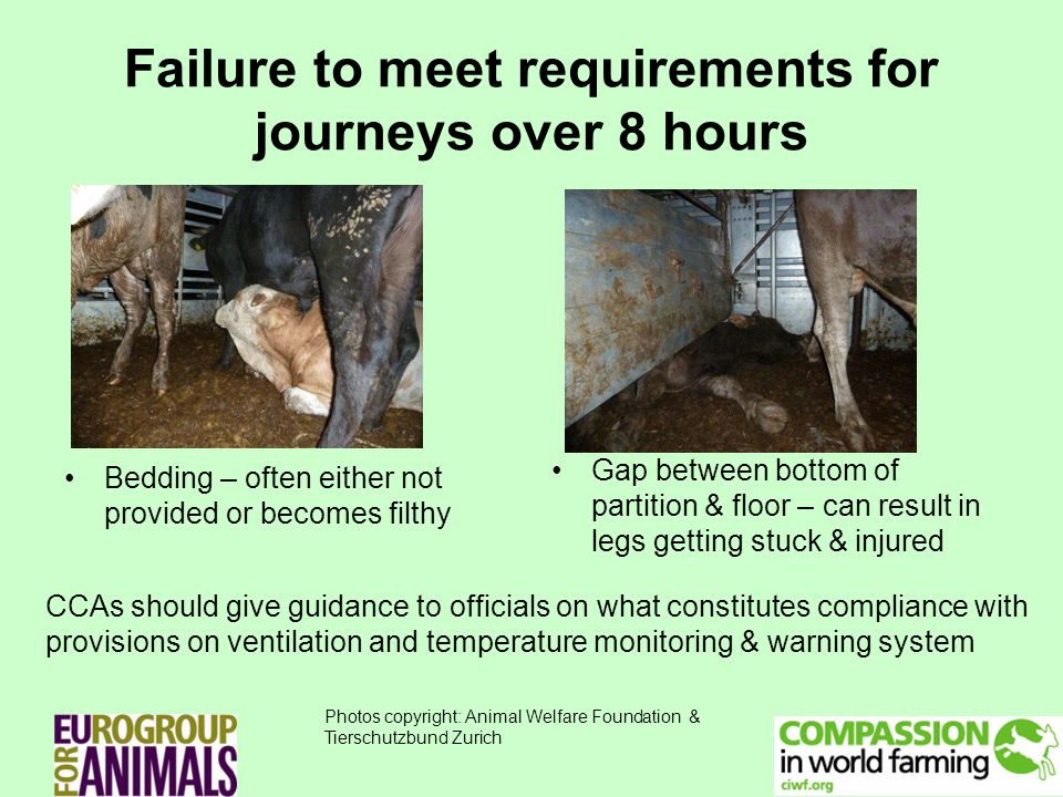 Failure to meet requirements for journeys over 8 hours Bedding – often either not provided or becomes filthy Gap between bottom of partition & floor – can result in legs getting stuck & injured CCAs should give guidance to officials on what constitutes compliance with provisions on ventilation and temperature monitoring & warning system Photos copyright: Animal Welfare Foundation & Tierschutzbund Zurich