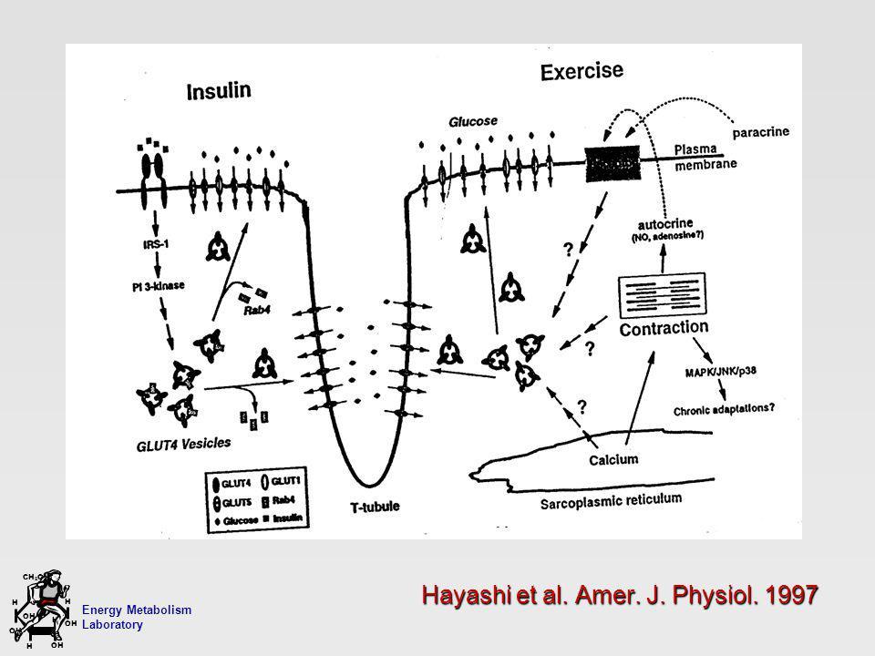 Energy Metabolism Laboratory H H OH CH 2 OH H OH H Hayashi et al. Amer. J. Physiol. 1997