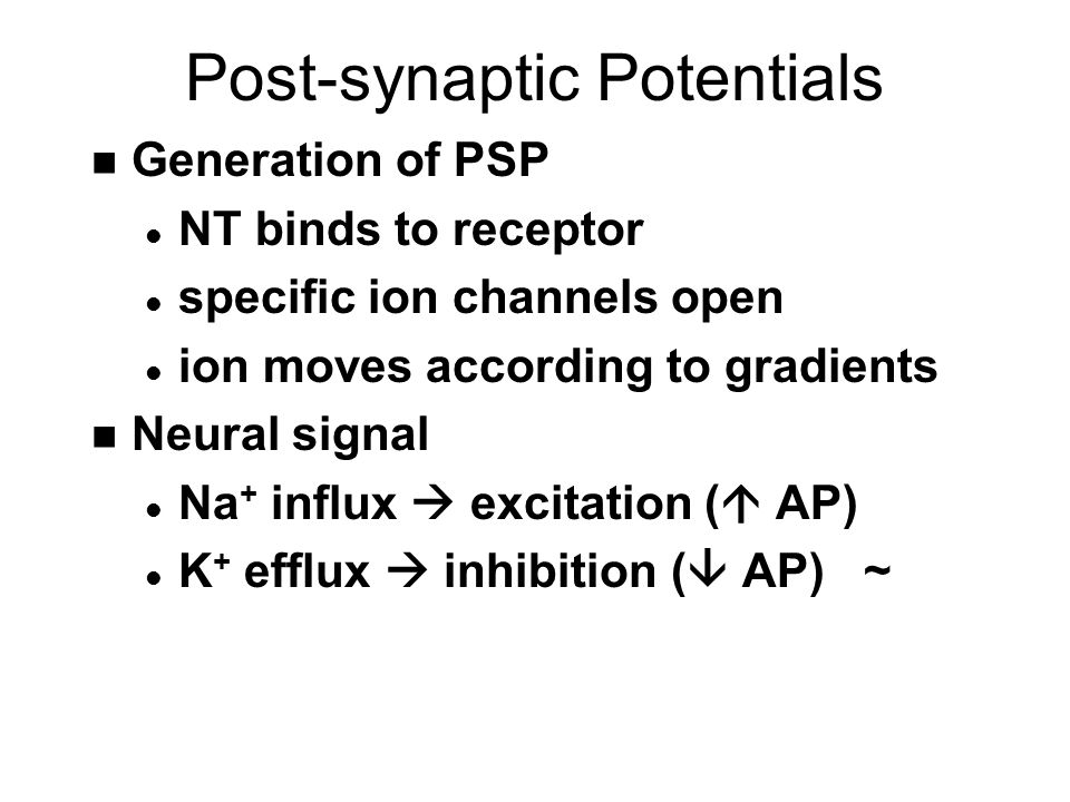 Post-synaptic Potentials n Generation of PSP l NT binds to receptor l specific ion channels open l ion moves according to gradients n Neural signal l