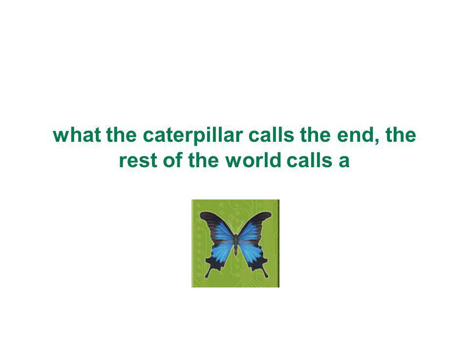what the caterpillar calls the end, the rest of the world calls a