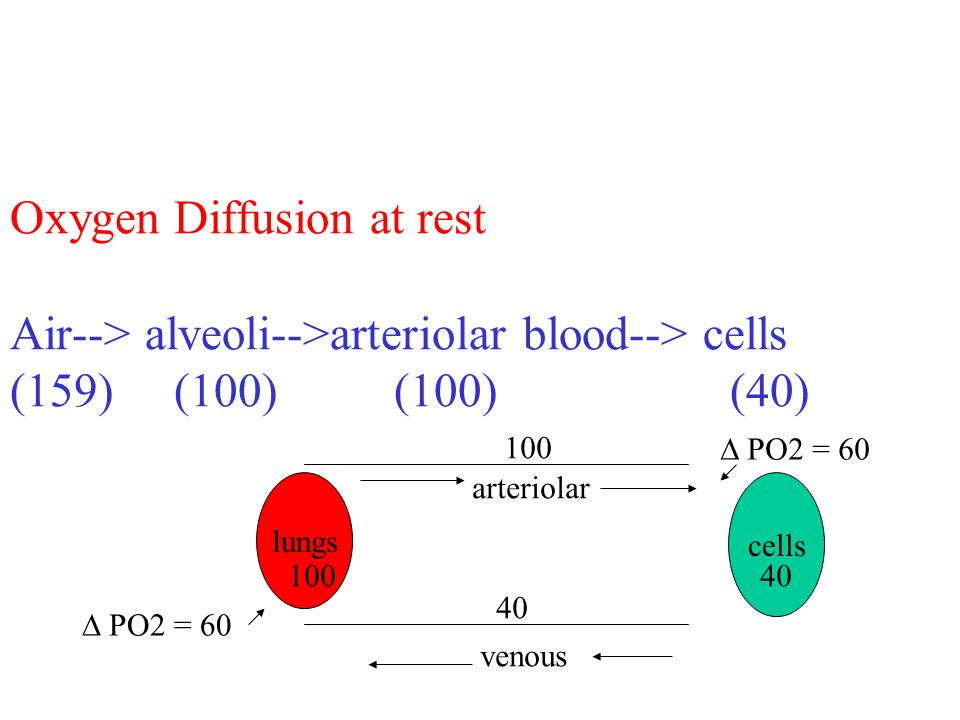 Oxygen Diffusion at rest Air--> alveoli-->arteriolar blood--> cells (159) (100)(100) (40) lungs venous arteriolar cells 100 40 PO2 = 60