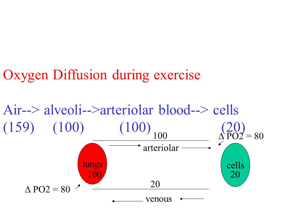 Oxygen Diffusion during exercise Air--> alveoli-->arteriolar blood--> cells (159) (100)(100) (20) lungs venous arteriolar cells 100 20 PO2 = 80