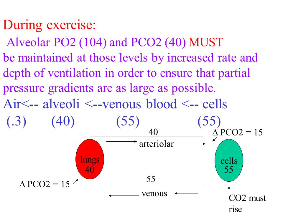 During exercise: Alveolar PO2 (104) and PCO2 (40) MUST be maintained at those levels by increased rate and depth of ventilation in order to ensure that partial pressure gradients are as large as possible.