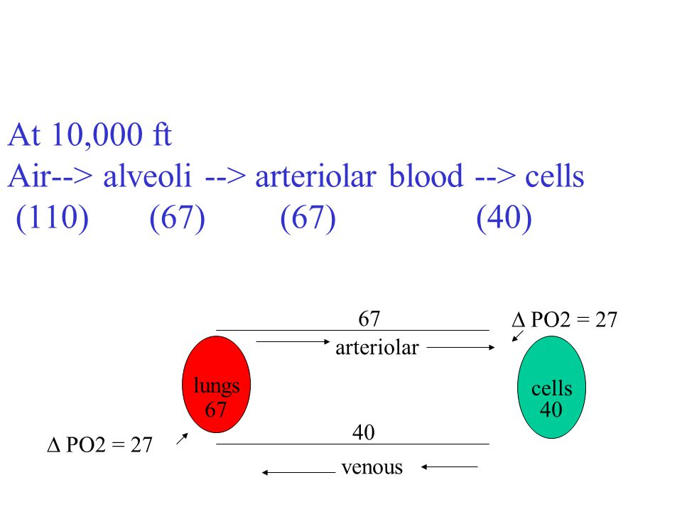 At 10,000 ft Air--> alveoli --> arteriolar blood --> cells (110) (67)(67) (40) lungs venous arteriolar cells 67 40 PO2 = 27