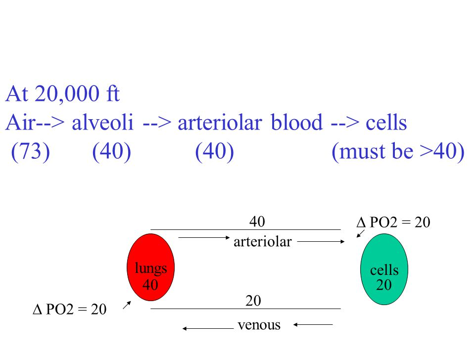 At 20,000 ft Air--> alveoli --> arteriolar blood --> cells (73) (40)(40) (must be >40) lungs venous arteriolar cells 40 20 PO2 = 20