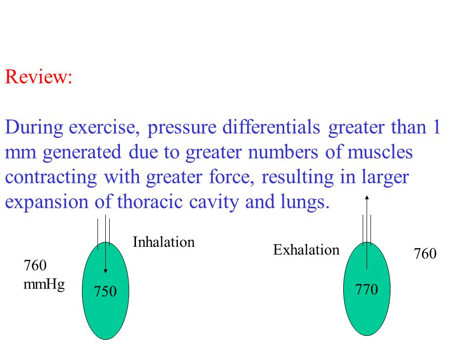 Review: During exercise, pressure differentials greater than 1 mm generated due to greater numbers of muscles contracting with greater force, resulting in larger expansion of thoracic cavity and lungs.