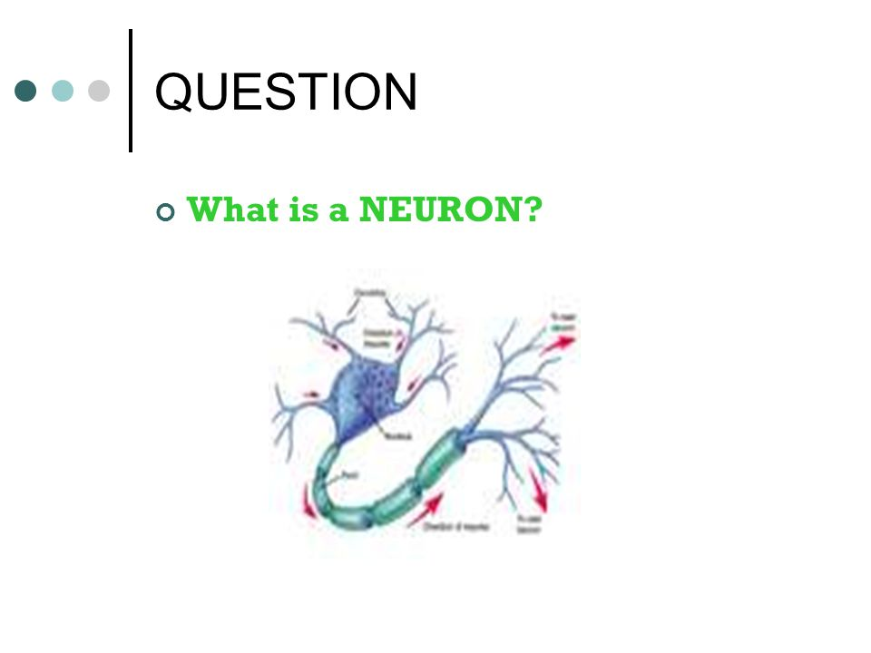 ANSWER A neuron is a nerve cell that is the basic building block of the nervous system.