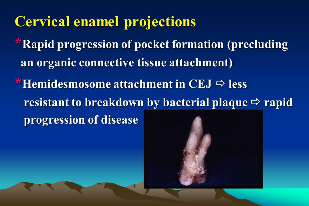Cervical enamel projections * Rapid progression of pocket formation (precluding an organic connective tissue attachment) an organic connective tissue