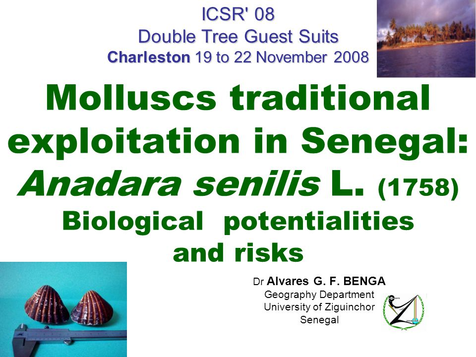 Molluscs traditional exploitation in Senegal: Anadara senilis L.