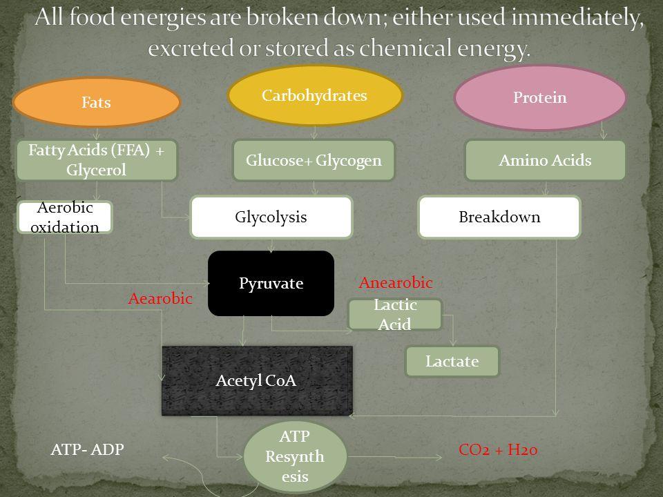 Carbohydrates Fats Protein Fatty Acids (FFA) + Glycerol Glycolysis Glucose+ GlycogenAmino Acids Aerobic oxidation Pyruvate Lactic Acid Lactate Acetyl