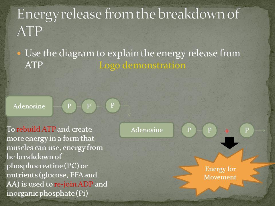 Use the diagram to explain the energy release from ATP Logo demonstration Adenosine Energy for Movement P P P Adenosine P PP + To rebuild ATP and crea