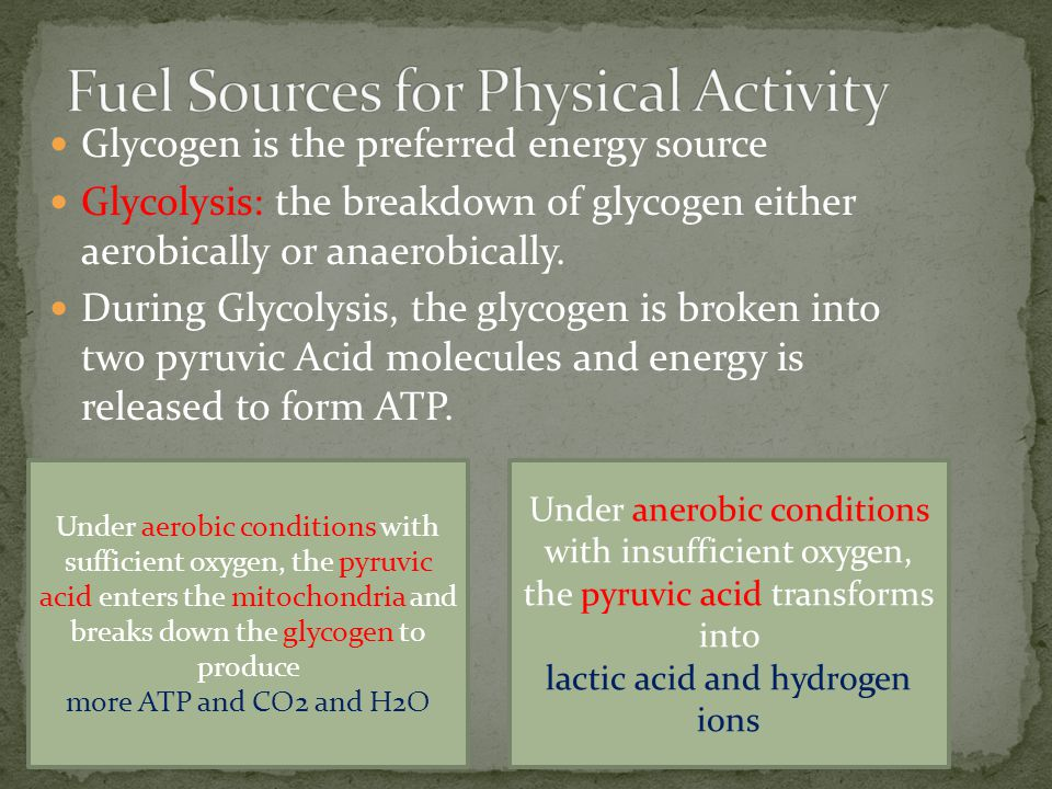 Glycogen is the preferred energy source Glycolysis: the breakdown of glycogen either aerobically or anaerobically. During Glycolysis, the glycogen is