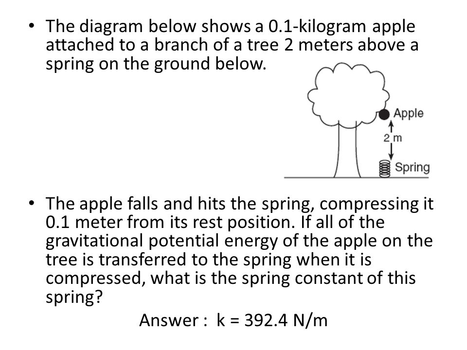 The diagram below shows a 0.1-kilogram apple attached to a branch of a tree 2 meters above a spring on the ground below. The apple falls and hits the