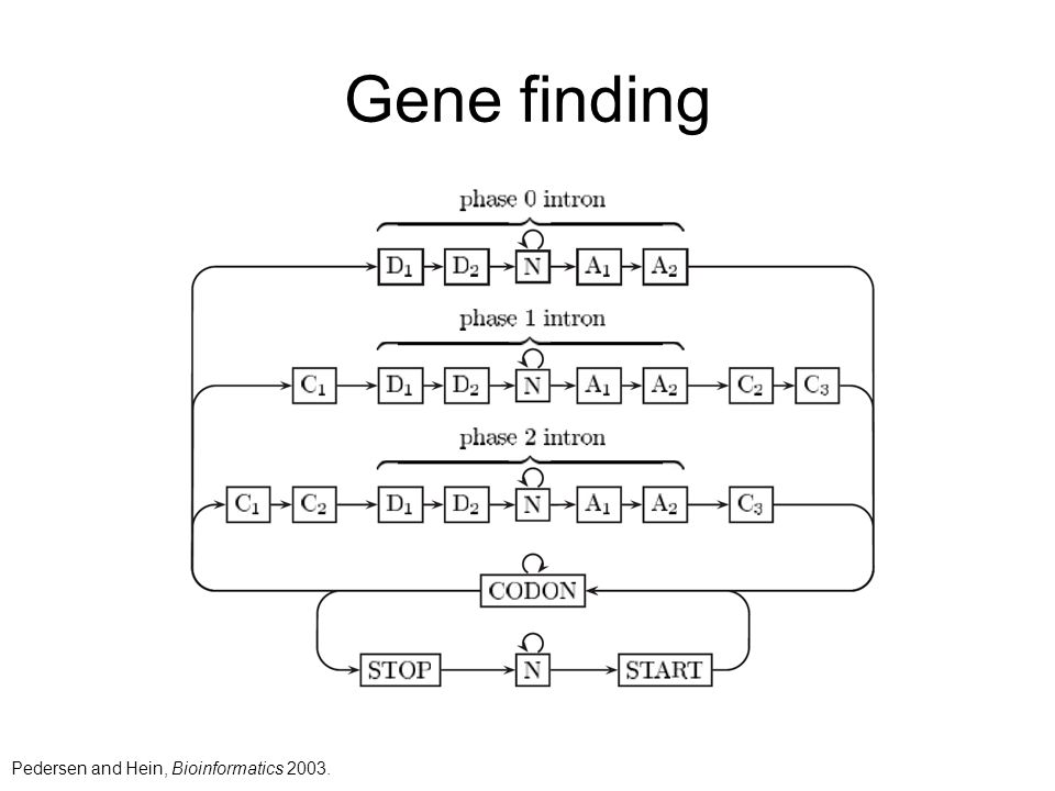 Gene finding Pedersen and Hein, Bioinformatics 2003.