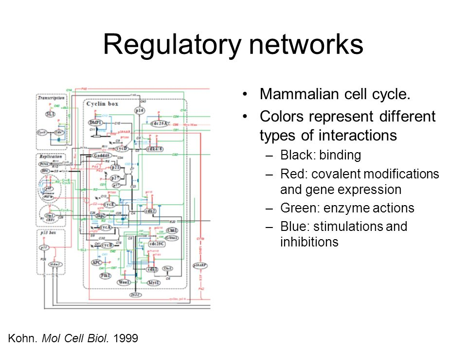 Regulatory networks Mammalian cell cycle.