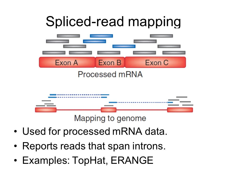 Spliced-read mapping Used for processed mRNA data.