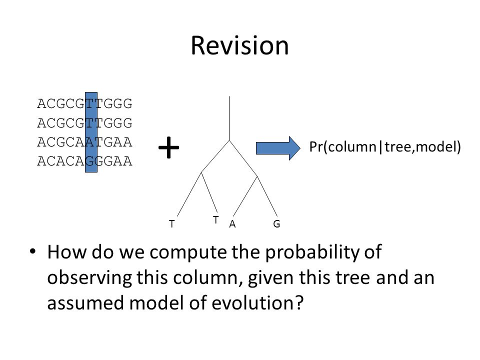 Revision How do we compute the probability of observing this column, given this tree and an assumed model of evolution.