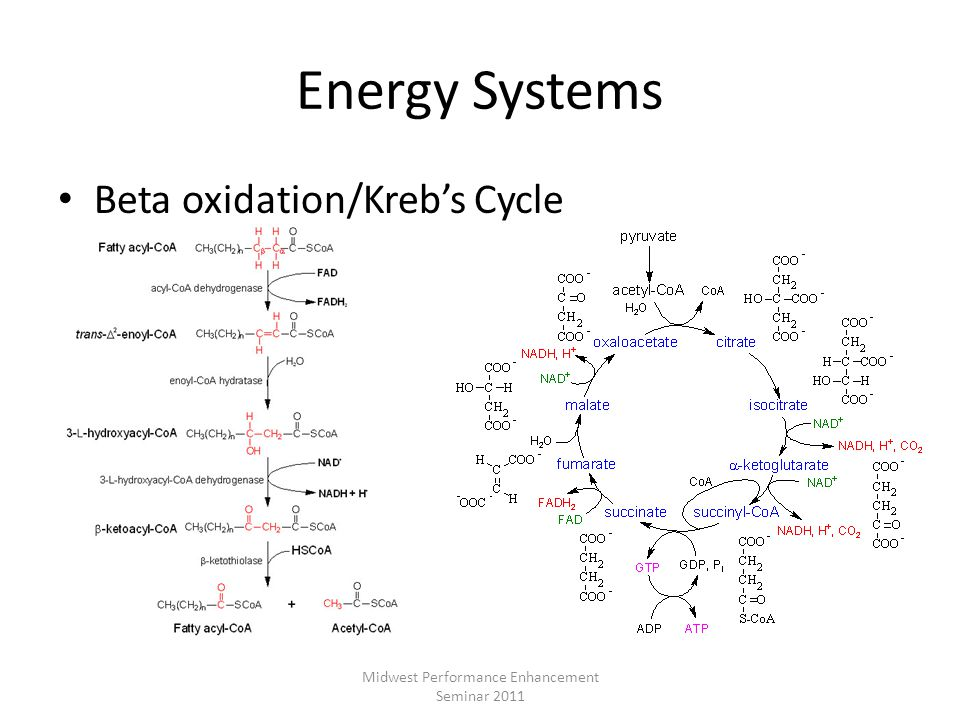 Energy Systems Beta oxidation/Krebs Cycle Midwest Performance Enhancement Seminar 2011