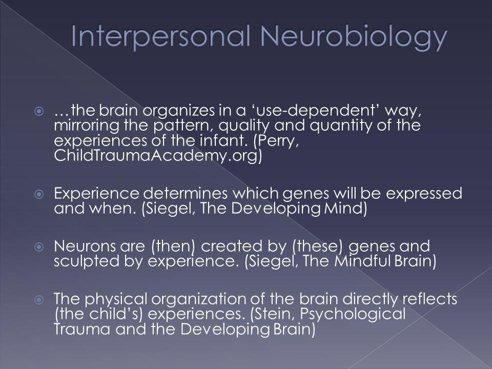 …the brain organizes in a use-dependent way, mirroring the pattern, quality and quantity of the experiences of the infant. (Perry, ChildTraumaAcademy.