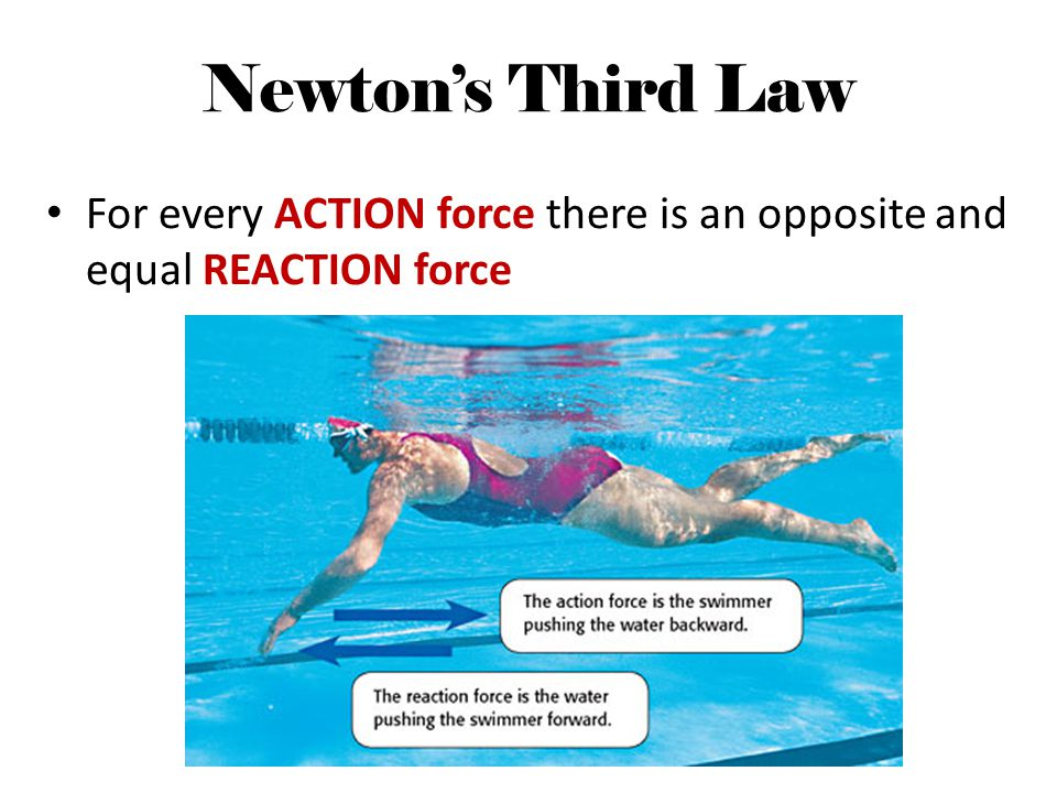Newtons Third Law For every ACTION force there is an opposite and equal REACTION force