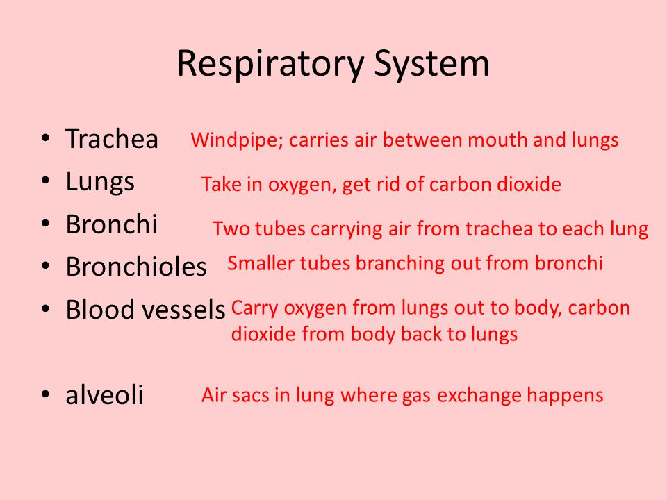 2.Why must the lungs have a large number of blood vessels in them.