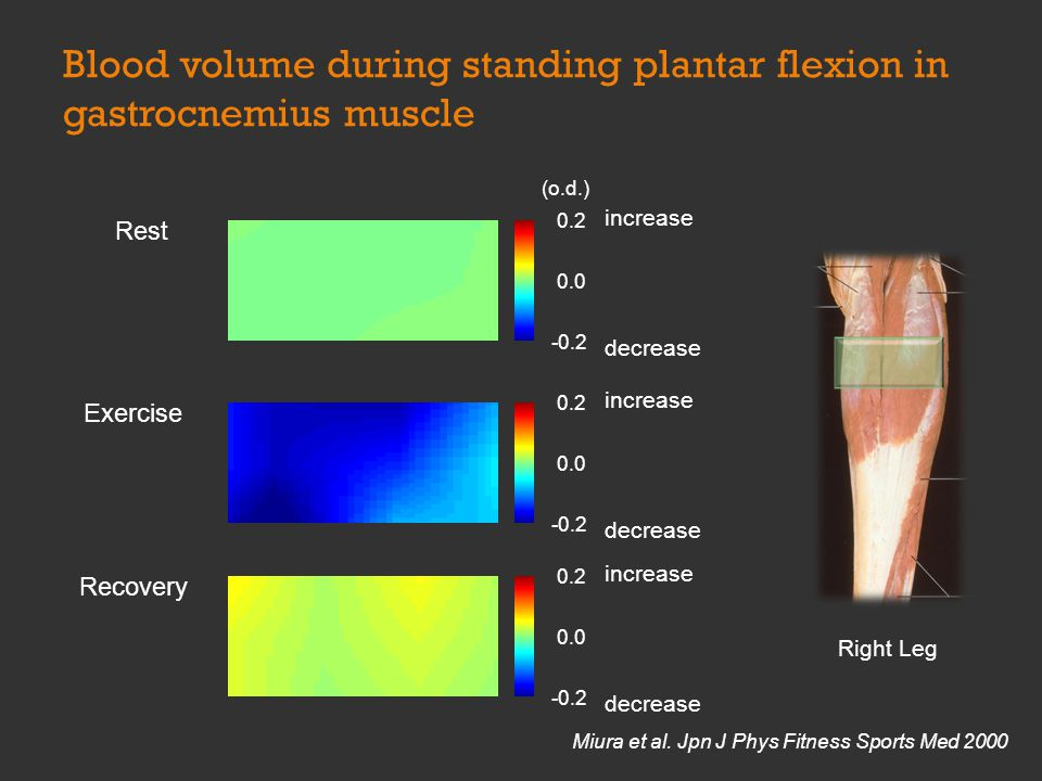 0.2 0.0 -0.2 Exercise increase decrease 0.2 0.0 -0.2 Recovery increase decrease Right Leg 0.2 0.0 -0.2 Rest increase decrease (o.d.) Blood volume during standing plantar flexion in gastrocnemius muscle Miura et al.