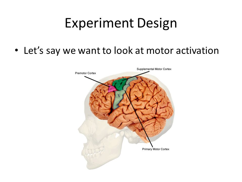 Experiment Design Lets say we want to look at motor activation