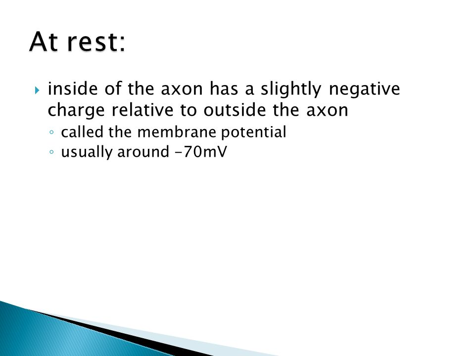 inside of the axon has a slightly negative charge relative to outside the axon called the membrane potential usually around -70mV