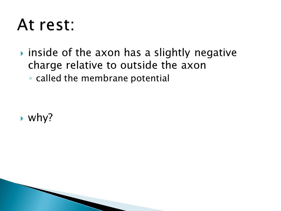 inside of the axon has a slightly negative charge relative to outside the axon called the membrane potential why?