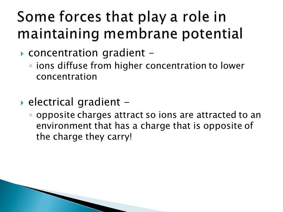 concentration gradient – ions diffuse from higher concentration to lower concentration electrical gradient - opposite charges attract so ions are attracted to an environment that has a charge that is opposite of the charge they carry!