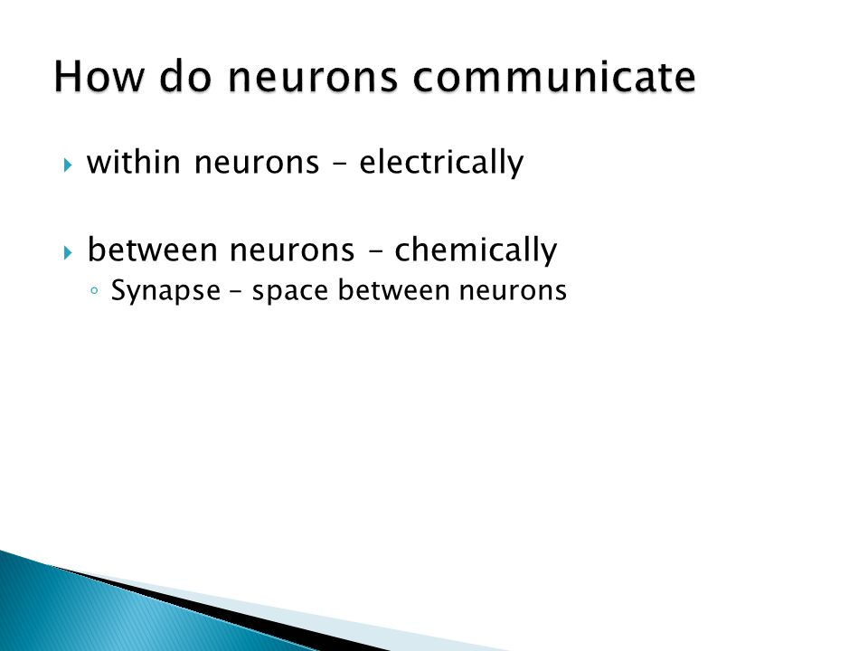 within neurons – electrically between neurons – chemically Synapse – space between neurons