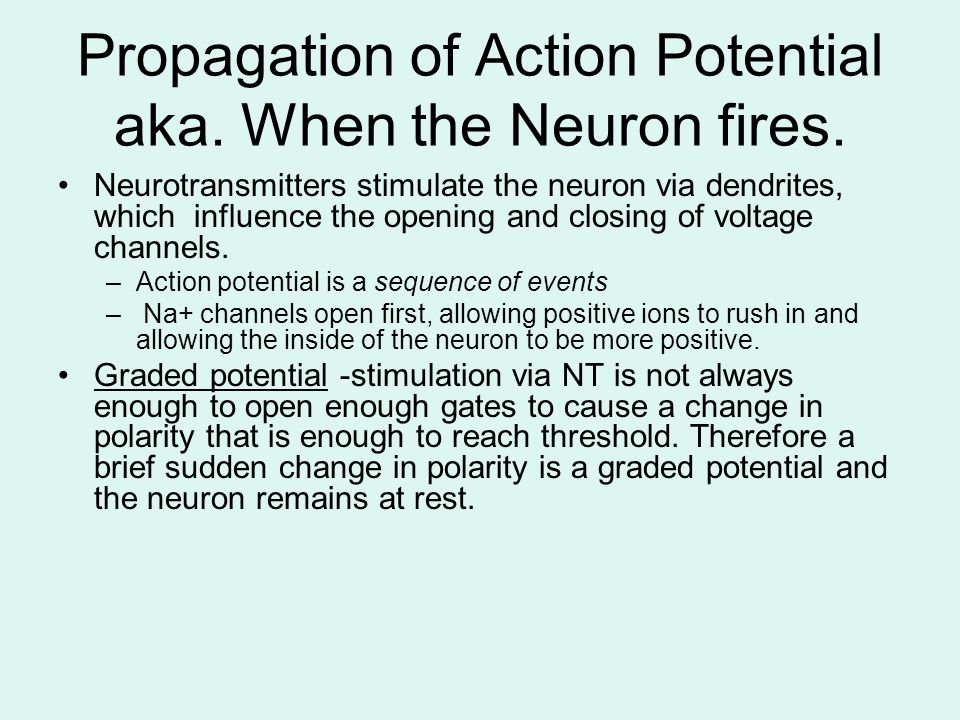 Propagation of Action Potential aka. When the Neuron fires. Neurotransmitters stimulate the neuron via dendrites, which influence the opening and clos