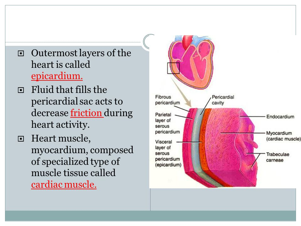 Outermost layers of the heart is called epicardium. Fluid that fills the pericardial sac acts to decrease friction during heart activity. Heart muscle