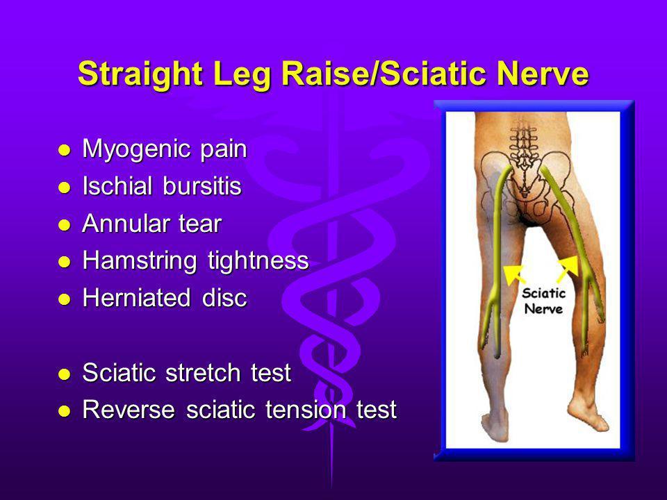 Straight Leg Raise/Sciatic Nerve Myogenic pain Myogenic pain Ischial bursitis Ischial bursitis Annular tear Annular tear Hamstring tightness Hamstring