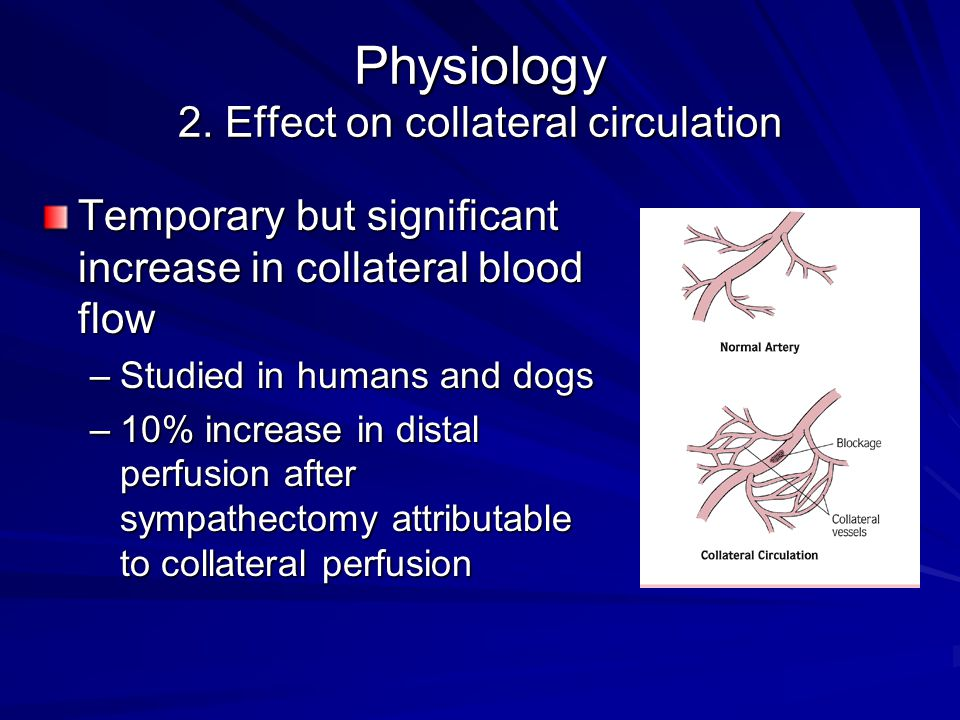 Physiology 2. Effect on collateral circulation Temporary but significant increase in collateral blood flow –Studied in humans and dogs –10% increase i