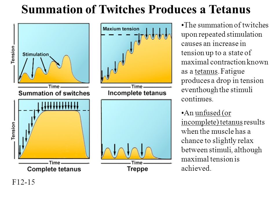 Summation of Twitches Produces a Tetanus F12-15 The summation of twitches upon repeated stimulation causes an increase in tension up to a state of maximal contraction known as a tetanus.