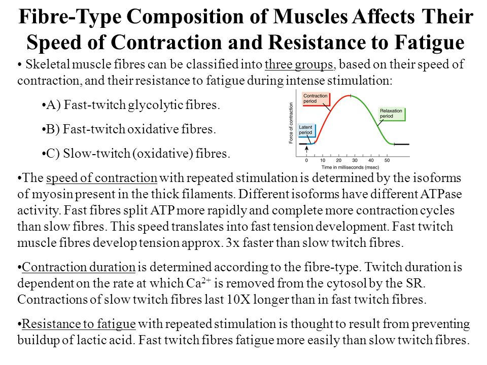 Skeletal muscle fibres can be classified into three groups, based on their speed of contraction, and their resistance to fatigue during intense stimulation: A) Fast-twitch glycolytic fibres.