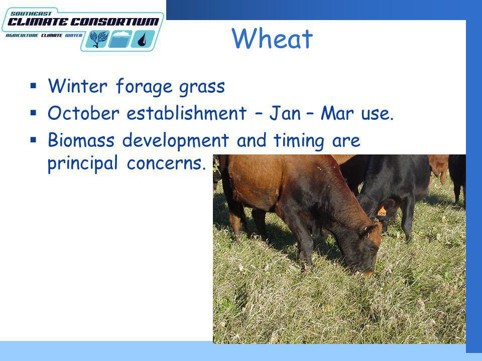 Wheat Winter forage grass October establishment – Jan – Mar use.