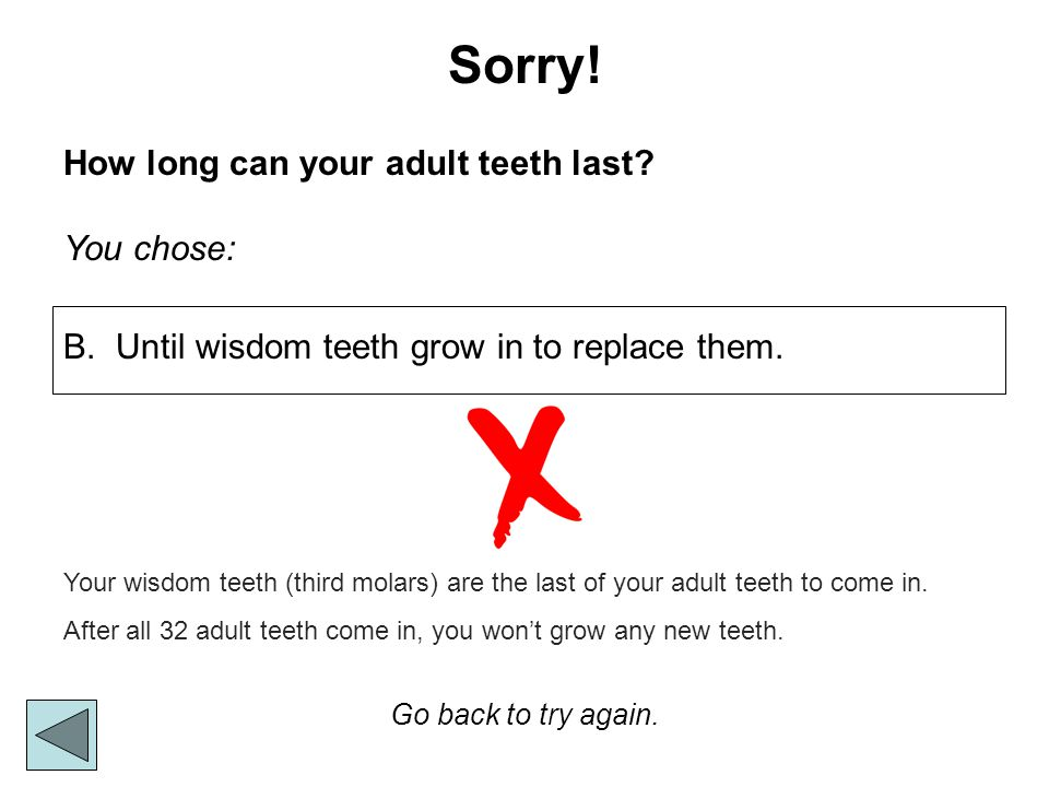 Sorry! How long can your adult teeth last? You chose: Go back to try again. Your wisdom teeth (third molars) are the last of your adult teeth to come