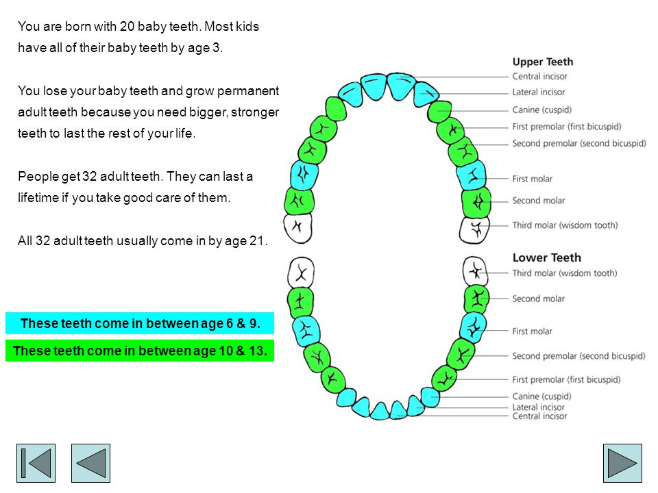 A Quick Checkup...How long can your adult teeth last.