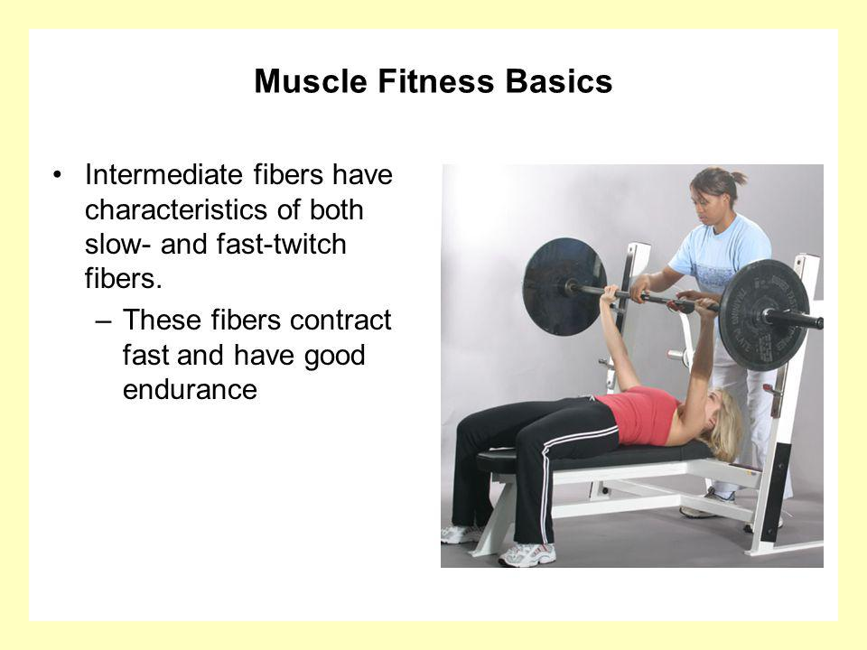 Muscle Fitness Basics Intermediate fibers have characteristics of both slow- and fast-twitch fibers. –These fibers contract fast and have good enduran