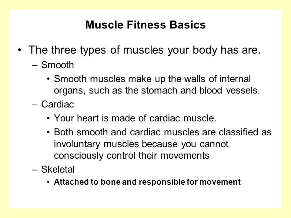Muscle Fitness Basics The three types of muscles your body has are. –Smooth Smooth muscles make up the walls of internal organs, such as the stomach a