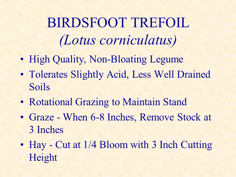 BIRDSFOOT TREFOIL (Lotus corniculatus) High Quality, Non-Bloating Legume Tolerates Slightly Acid, Less Well Drained Soils Rotational Grazing to Mainta