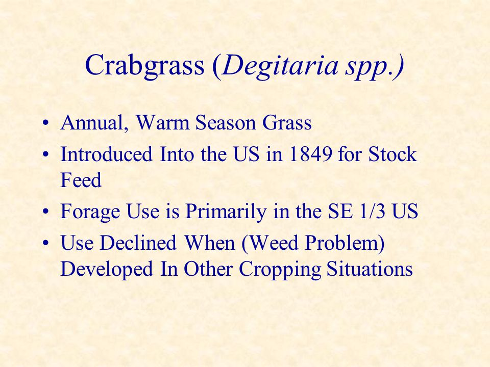 Crabgrass (Degitaria spp.) Annual, Warm Season Grass Introduced Into the US in 1849 for Stock Feed Forage Use is Primarily in the SE 1/3 US Use Declin