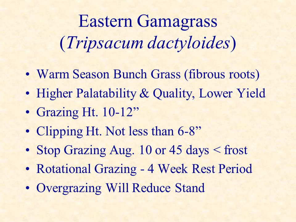 Eastern Gamagrass (Tripsacum dactyloides) Warm Season Bunch Grass (fibrous roots) Higher Palatability & Quality, Lower Yield Grazing Ht. 10-12 Clippin